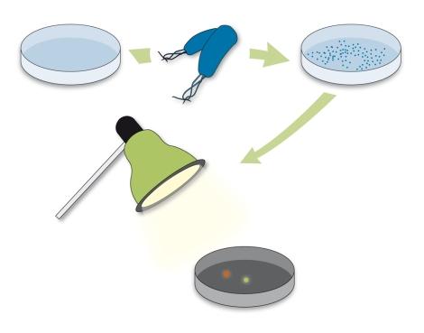 escherichia-coli-fluorescencia-mensaje-cifrado