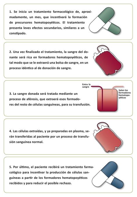 infografia-donacion-medula