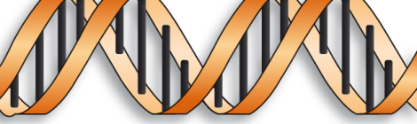 adn-genoma-cromosoma