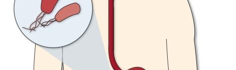 infografia-bacteria-hipotalamo-hambre