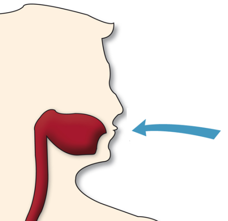 protozoosis-ingesta-via oral-giardia