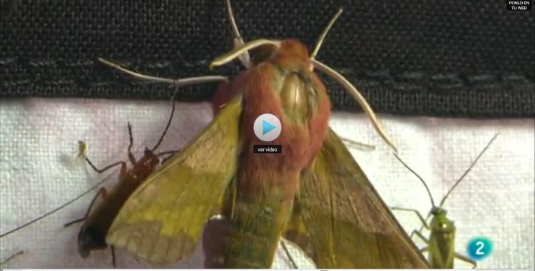 portada-video-mariposas